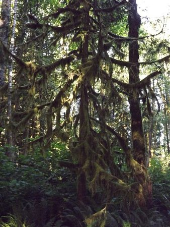 Wildwood Recreation Site: wildwood mossy tree