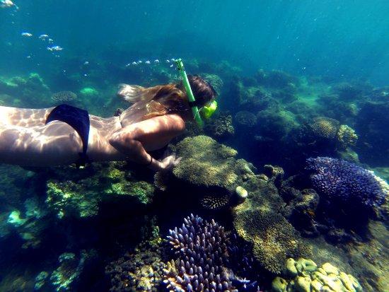 Bloomfield, Australien: snorking