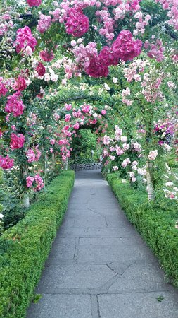 Rose Archway Picture Of The Butchart Gardens Central