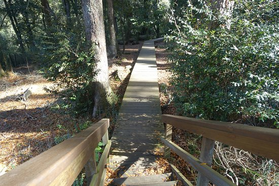 Dorrigo, Αυστραλία: pathway down to Dangar Falls