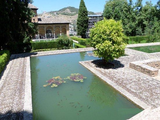 Jardin arbor avec bassin d 39 eau picture of the alhambra for Bassin eau jardin