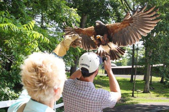 Hot Springs, VA: Experience Falconry