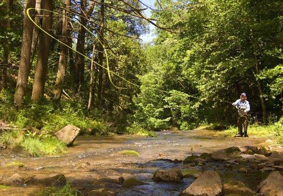 Hot Springs, Вирджиния: Fly Fishing on the Cascades Stream