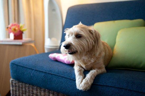 Kimpton Shorebreak Hotel: Pet Friendly