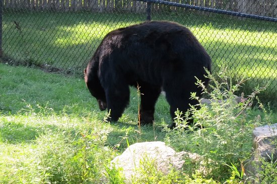 NEW Zoo & Adventure Park: Bear