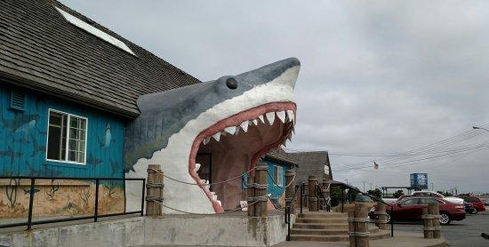 Ocean Shores, WA: So cool