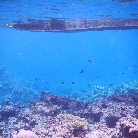 South Pacific Cruises - Coongoola Day Cruise: Snorkelling