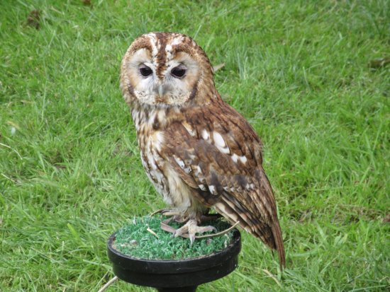 Kelham, UK: Owl
