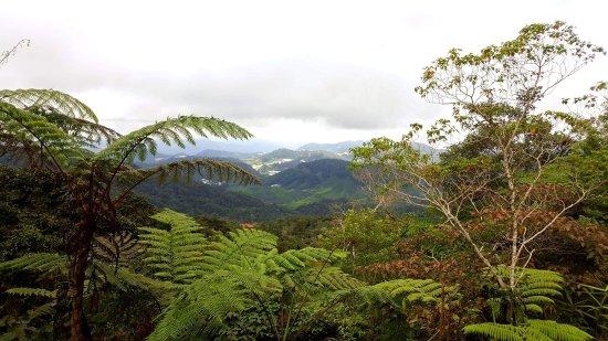 Cameron Highlands Trail No. 10 : received_10159258013115436_large.jpg