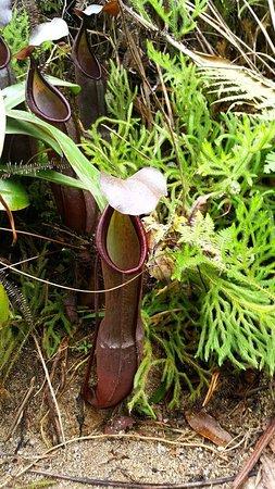 Cameron Highlands Trail No. 10 : received_10159258013795436_large.jpg
