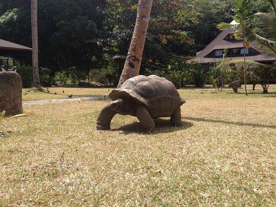 Anse la Blague, Seychellen: photo0.jpg