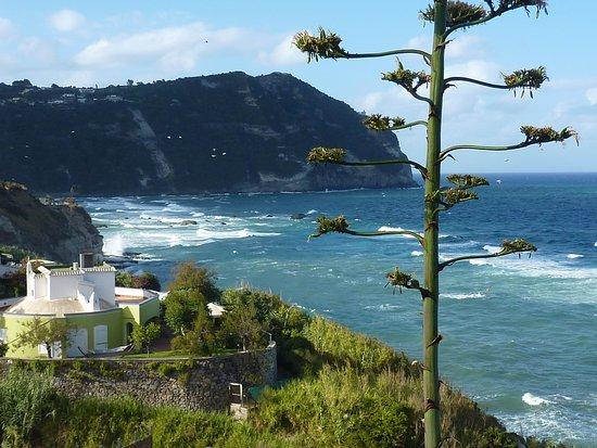 Hotel  Providence Terme & Spa: Vista mare dalla terrazza