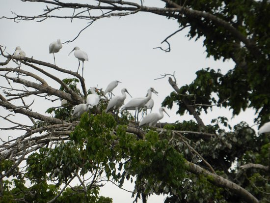 Salvaterra de Magos, Portugal: Some of the birds on the island (to prove we were really there!)