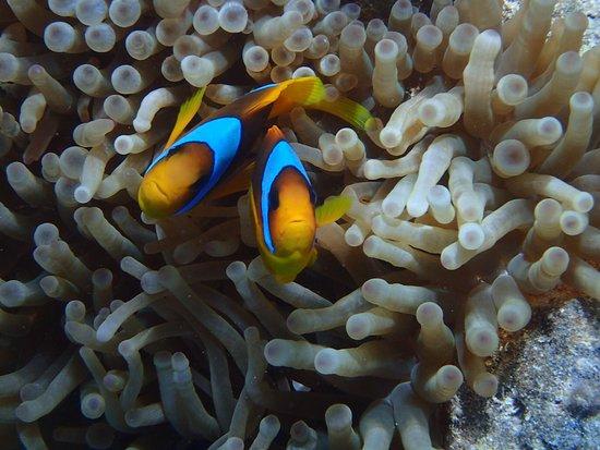 Shamandura Diving : photo1.jpg