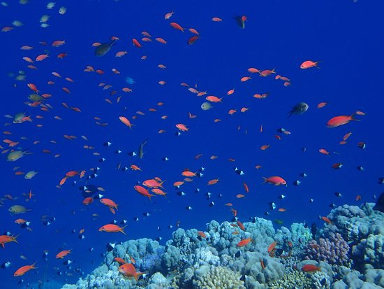 Shamandura Diving : photo2.jpg