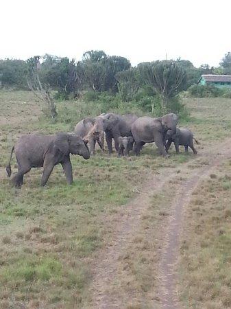 Kasese, Uganda: Around Njovu