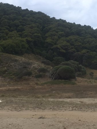 Megalos Aselinos Beach: alberi piegati dal vento costante