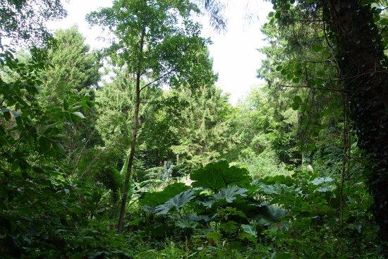 Jungle Garden Karlostachys: la jungle avec les Gunnera