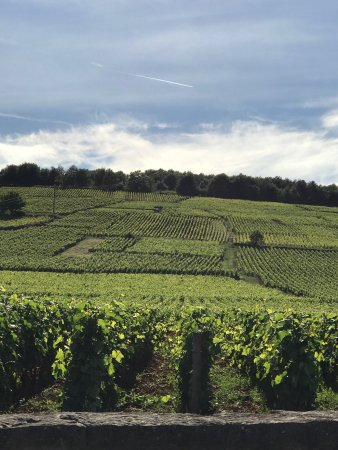 Saint-Nicolas-les-Citeaux, Prancis: Some photos of Stephanie teaching us about the region and of the different winemakers we met alo