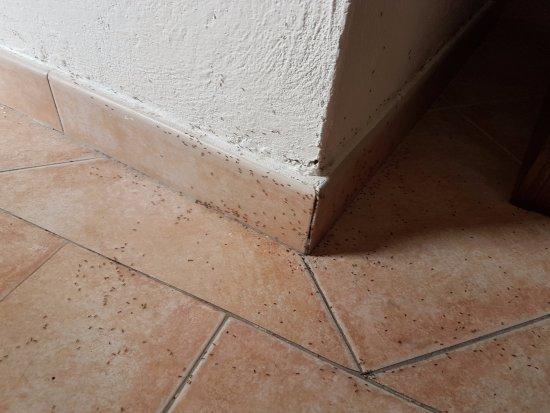 Acquafredda, إيطاليا: Invasione di formiche!!!