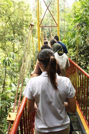 Jardin Botanico del Quindio: Puente Colgante