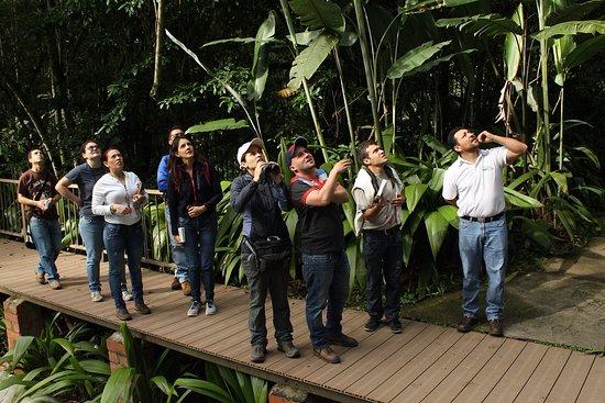 Jardin Botanico del Quindio: Observación de aves por los senderos