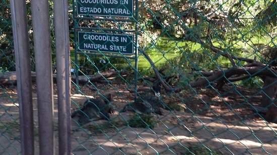 Ixtapa Island (Isla Ixtapa): Antes de cruzar a la Isla