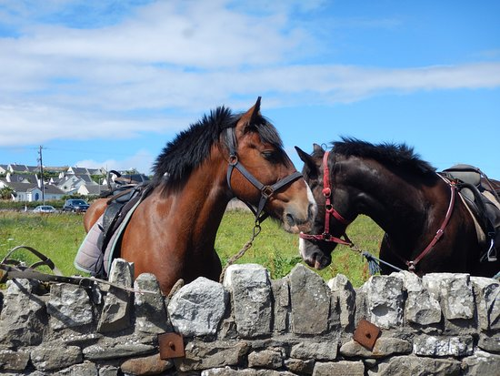 Island View Riding Stables: Island ride