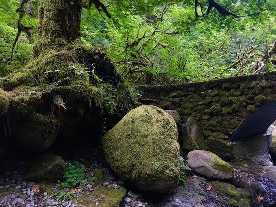 Wiesendanger Falls: photo6.jpg