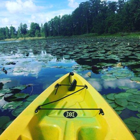 Lake Louisa State Park: photo0.jpg