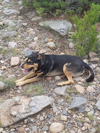 Taos County, NM: Libby, helpful stable pup