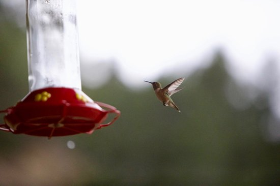 Orderville, UT: Hummingbird on Front Porch