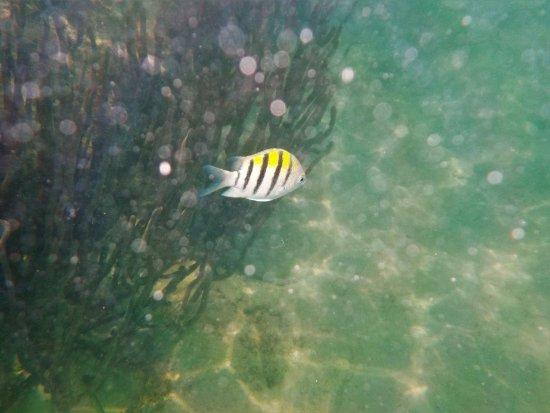 Hamilton, Bermuda: Fish on Devil's Isle Snorkel Adventure