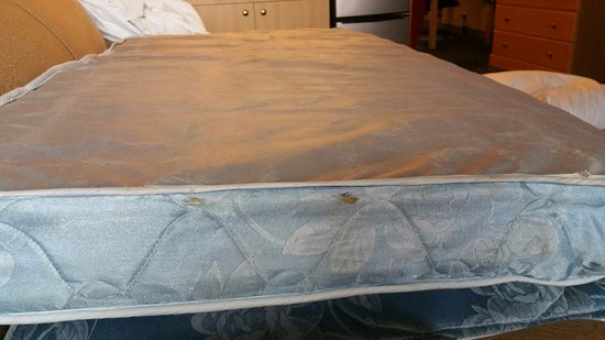 Ocean Shores, WA: The sofa bed in my room, the  didnt even care to change it