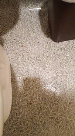 Sunset Oceanfront Lodging: Blood splatter on the bathroom floor.