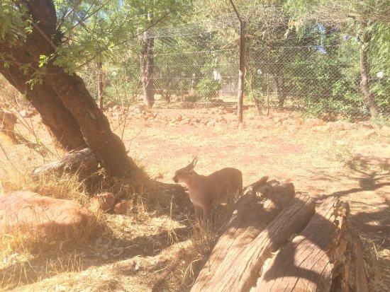 Okambara Elephant Lodge: photo1.jpg