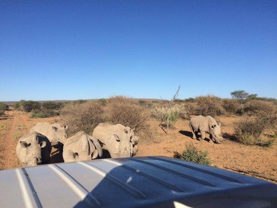 Okambara Elephant Lodge: photo2.jpg