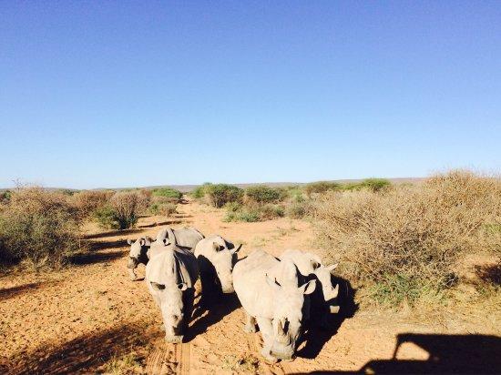 Okambara Elephant Lodge: photo6.jpg