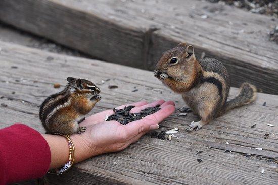 Nathrop, CO: Cute little fellas