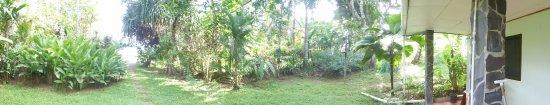 Casita Corcovado: Garden