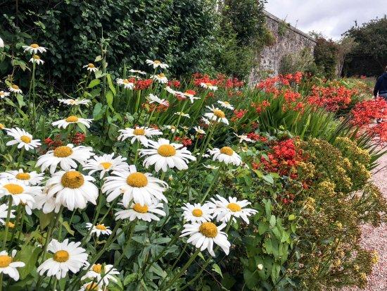 Aberdour Castle: Walled garden