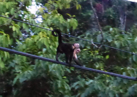 Casita Corcovado: Mother and baby