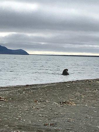 Longyearbyen, Norway: photo1.jpg