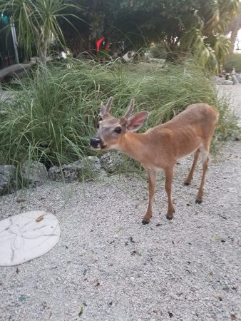Deer Run Bed Amp Breakfast Updated Prices Reviews Amp Photos Big Pine Key Florida B Amp B