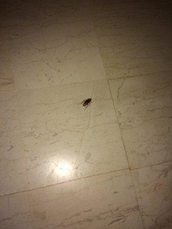 Agia Fotia, Griechenland: 1 uges ferie spildt på dette hotel penge ud af vinduet.!!! Karkelakker på værelset ik 1 men mang