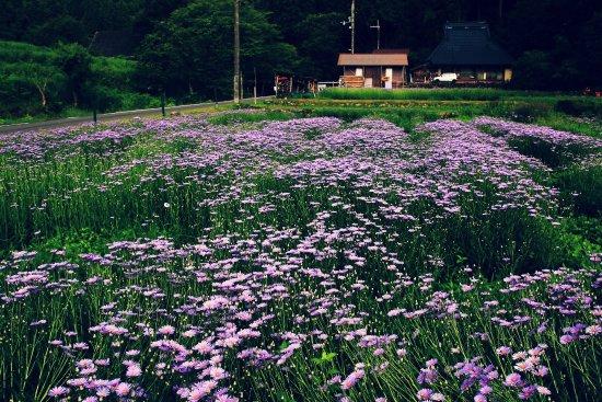 Kitayama Yuzengiku