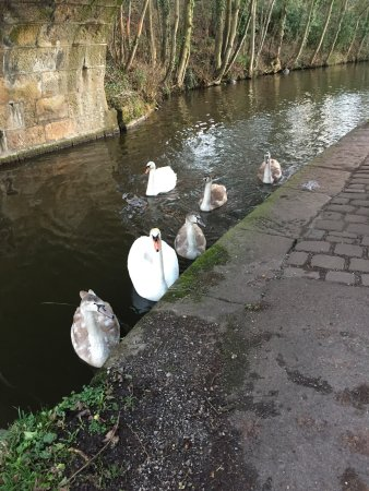 Lancaster Canal: photo3.jpg