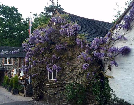 Woodhouse Eaves, UK: The beautiful wisteria.