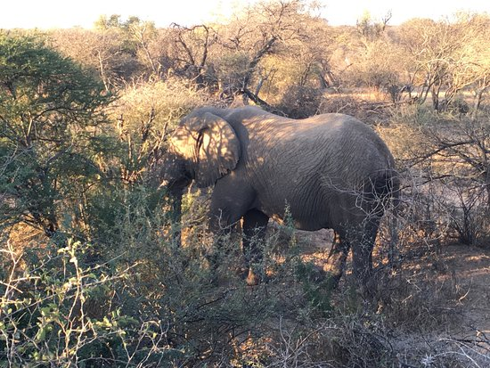 Thabazimbi, South Africa: photo2.jpg