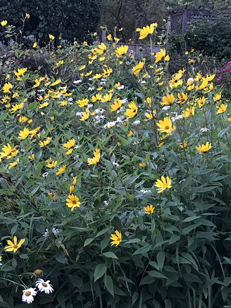 Foto de New Forest National Park Hampshire